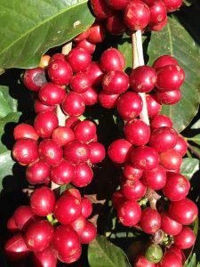 coffee-645514_640-225x300.jpg